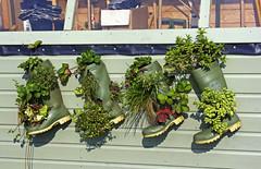 Wellington Boot Planters