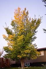 Seasons Changing (273/366)