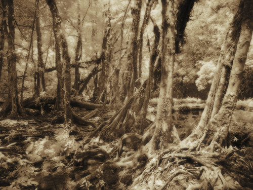 The Woods of Semuc Champey