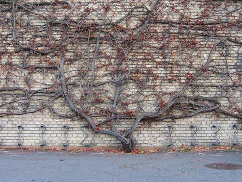Wall tree, Aarhus, Denmark