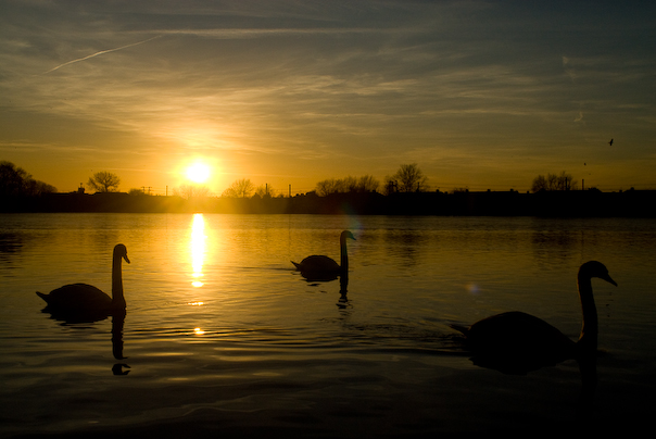 Trio at sunset