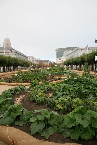 Urban garden, San Francisco
