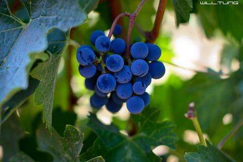 @ V. Sattui Winery