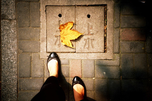 [shanghai] autumn leaves , 秋天別來。