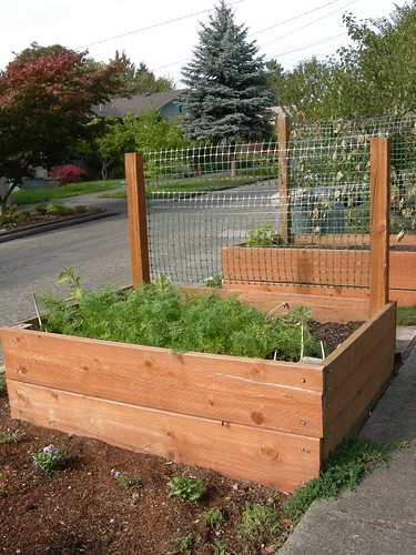 Planter box & trellis II