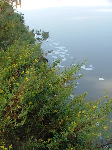 Chemical pollution in the Yarkon River