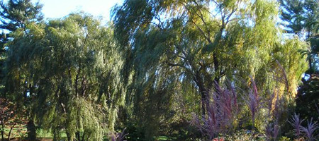 The Willow, for Romantics everywhere.