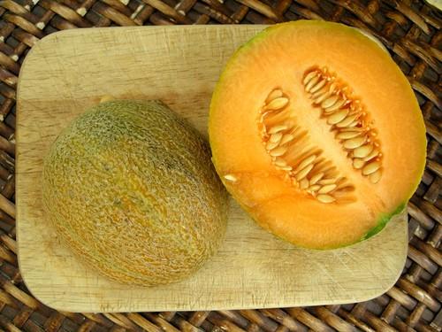 melon1822