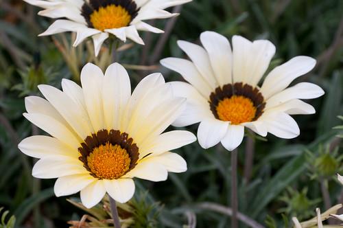 Días floridos II