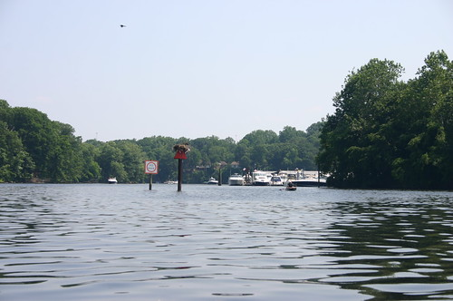 Kayaking Occoquan River - River with Osprey Nest (By Ryan Somma)