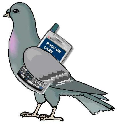 Pigeons: Smarter Than You Think