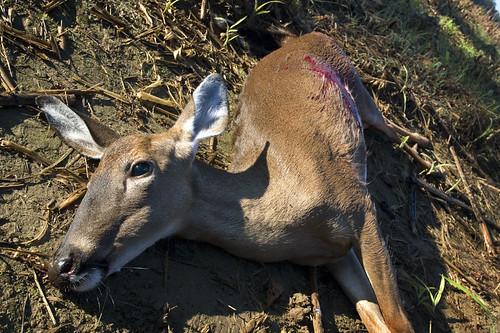 R.I.P. Bambi....R.I.P.