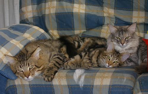 Gatos que descansan unidos, unidos se mantienen.