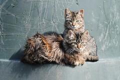 ~Cute Cats~