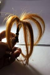 大二時剪掉的金毛