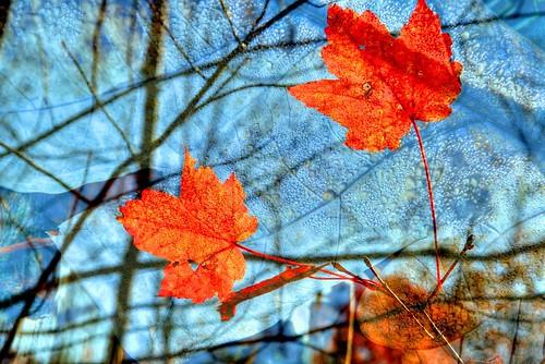 Composite—With Autumn Dew