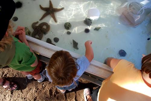 three kids watch fish