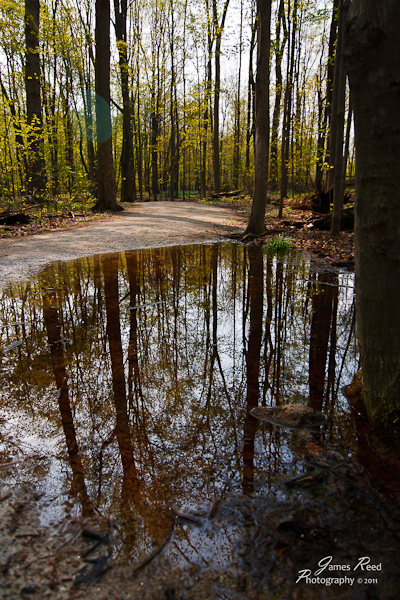 Trees reflected in a large puddle.