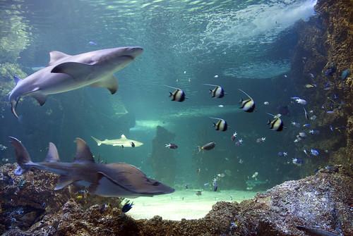 Vista general de uno de los tanques con tiburones