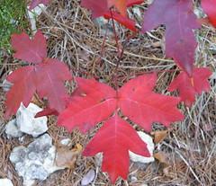 leaves2