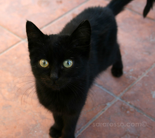 A black, curious cat. Doomed!