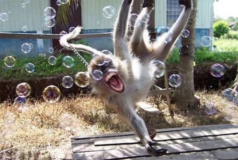 monkeybubbles