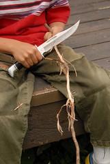 Peeling Spruce Root