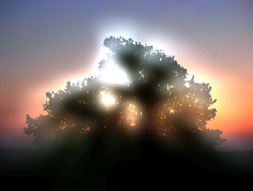 Tree of Light by Jason A. Samfield