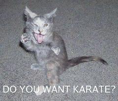 funny_cats_a_023