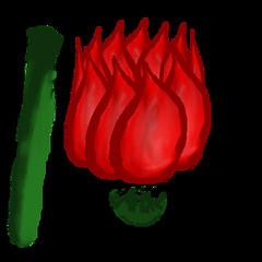 rose-007