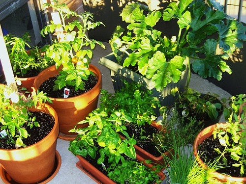 My patio garden - mid-July