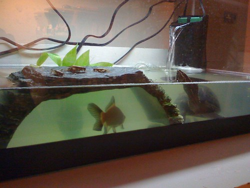 crickets in a turtle tank setup