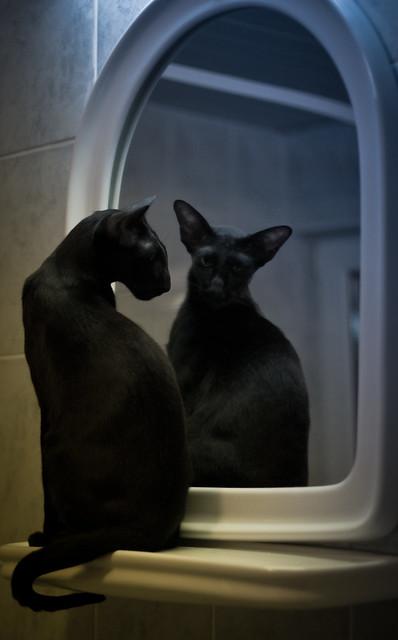 Double cat