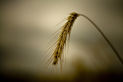 Grain (1).jpg