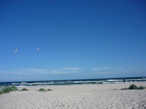 Two seagulls on Sandhammaren's beach