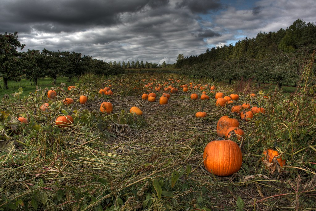 Charlie Brown Fall Wallpaper Photo Essay Incredible Pictures Of Pumpkin Patches