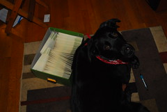 Angus's paw is tired from addressing envelopes