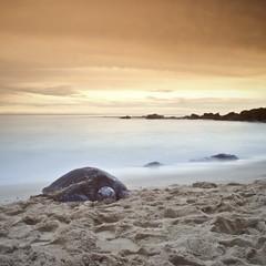 Turtle, Turtle Beach