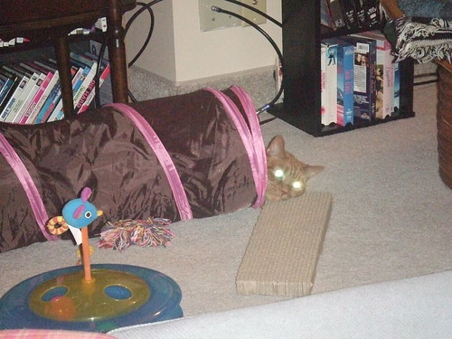 Laser kitty attempts to destroy interloper