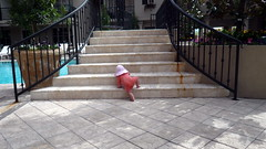 Poesy learns to climb the stairs, poolside, Ho...
