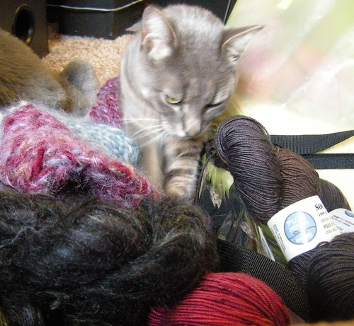 Dexter in the yarn pile