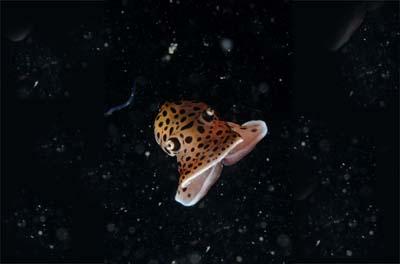 2498804723 7386d835f5 o Criaturas inacreditáveis do fundo do mar