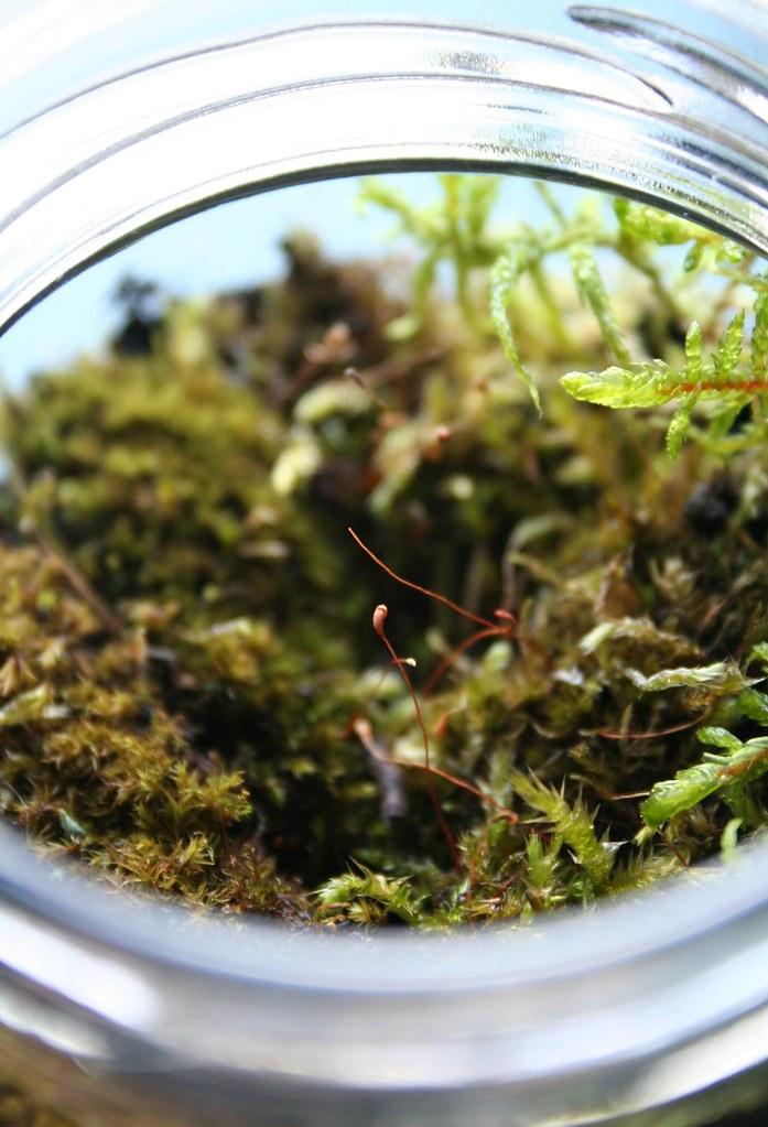 Moss Terrarium {03}