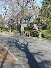 Tree shadow on street