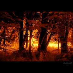 Spirit of the Light in my wild forest...!!! Es...