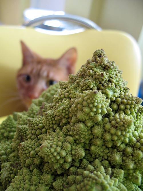 Fractal Food Curious Cat