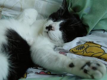 BamBam_bellyup_sleeping_20081129_01x