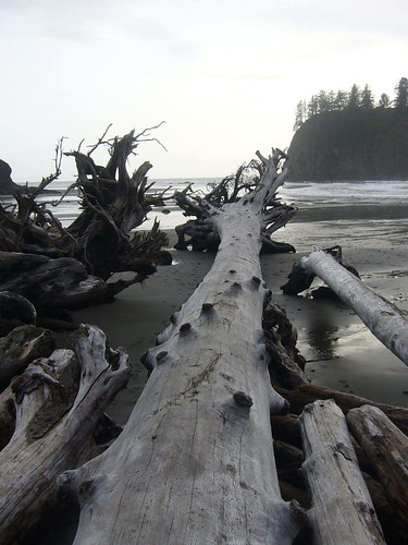 Driftwood of washington...