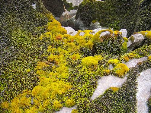 Spring moss