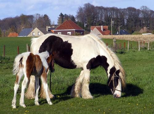 Moeder en Veulen